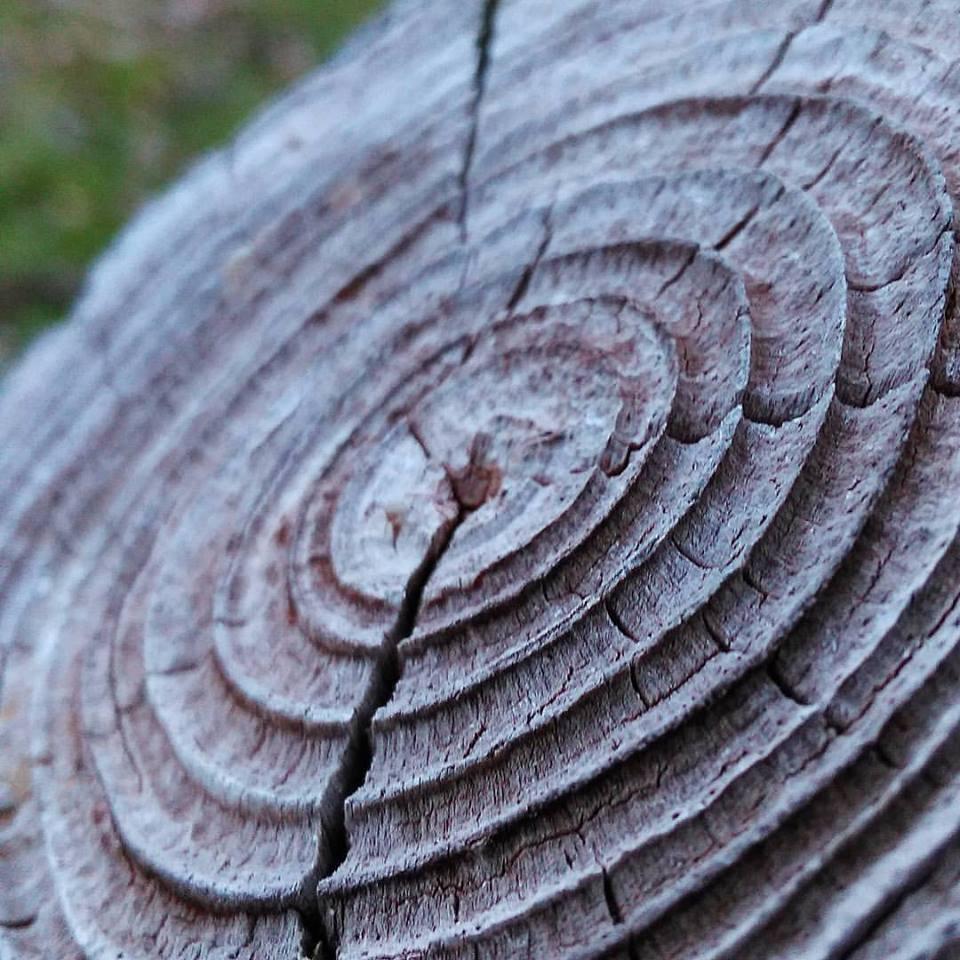 Verweerde jaarringen van een rond hout paaltje.