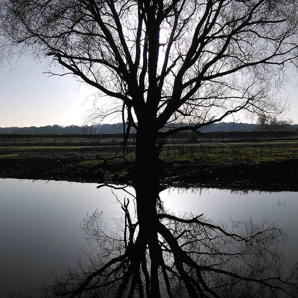 Vrijstaande boom met tegenlicht bij een vijver.