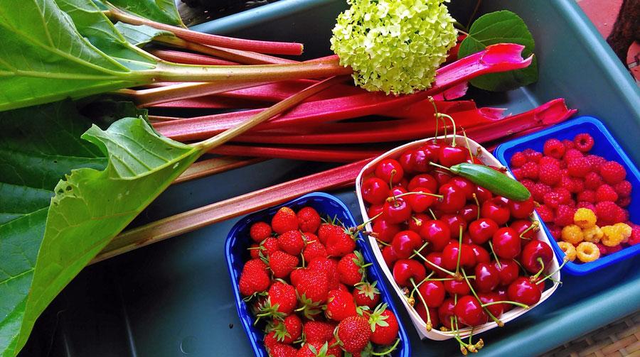 Fruit oogst