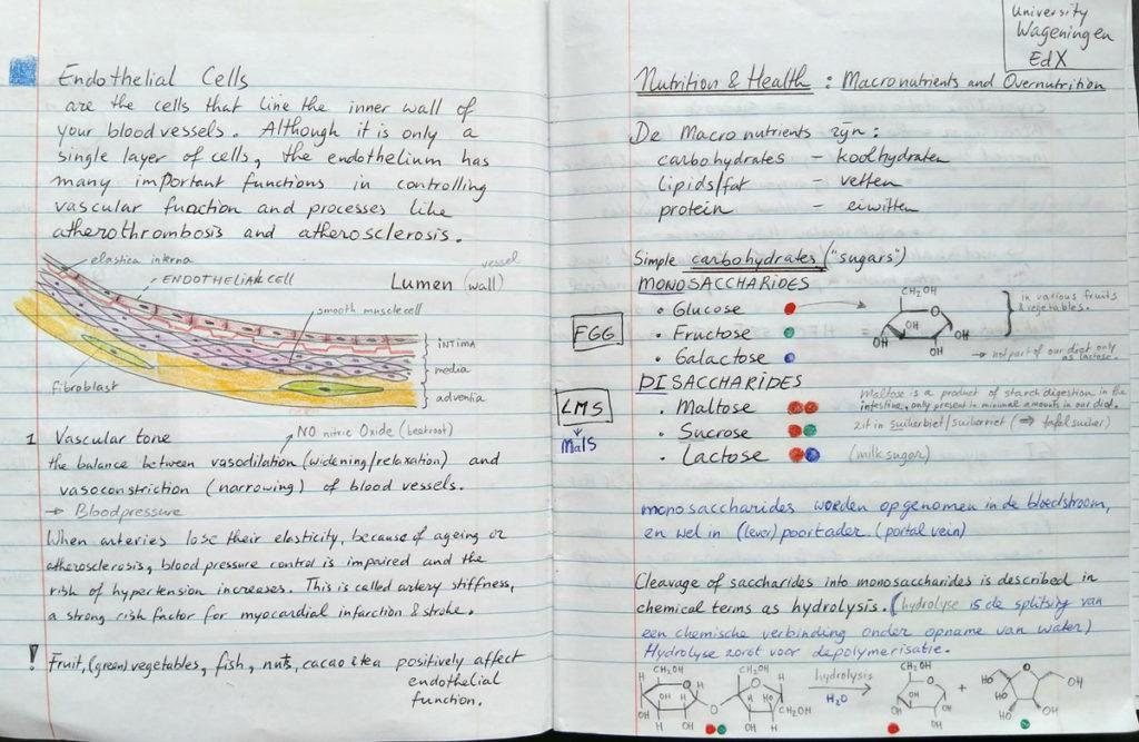 Bladzijde uit mijn aantekeningen schrift macronutrients.