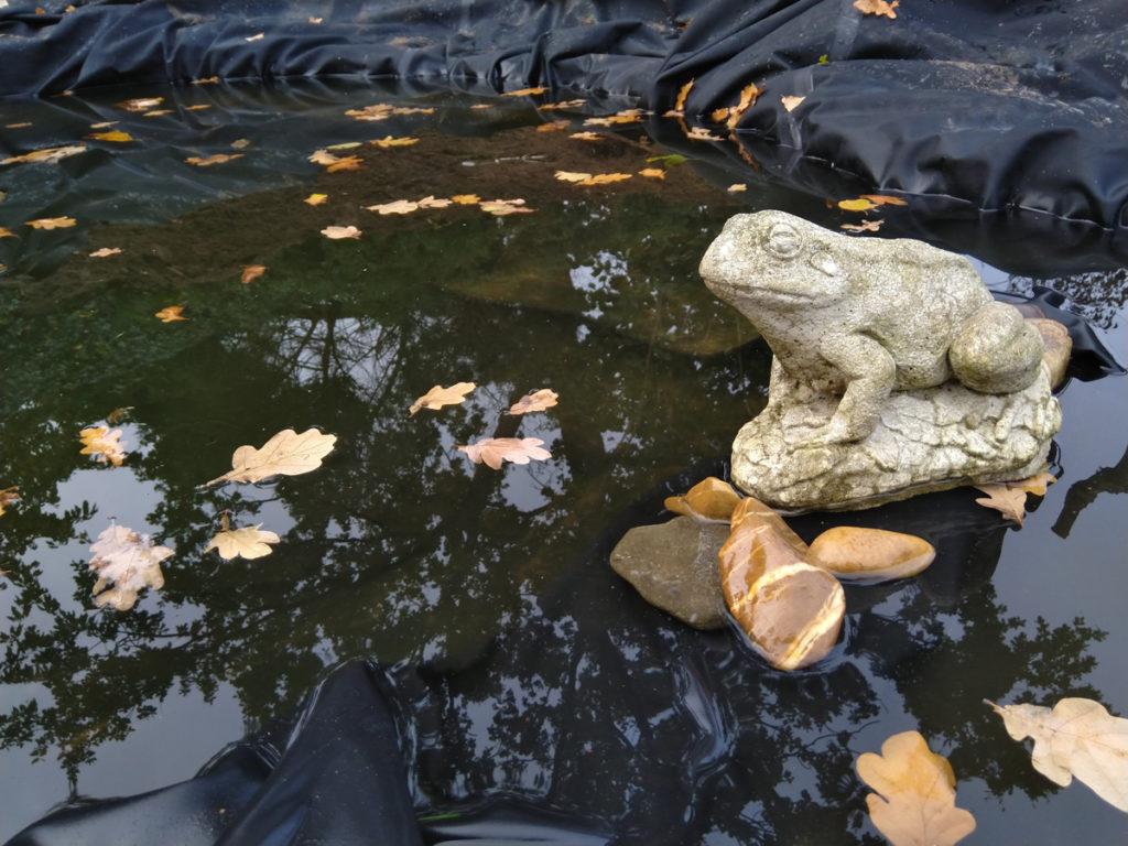 Stenen kikker bij de nieuwe vijver