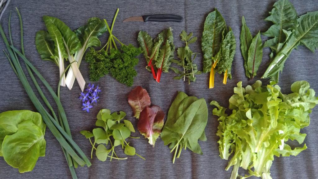 Veertien verschillende sla soorten voor in de salade.