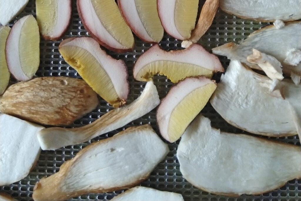 Eekhoorntjes brood in dunne schijfjes om te drogen voor later gebruik.