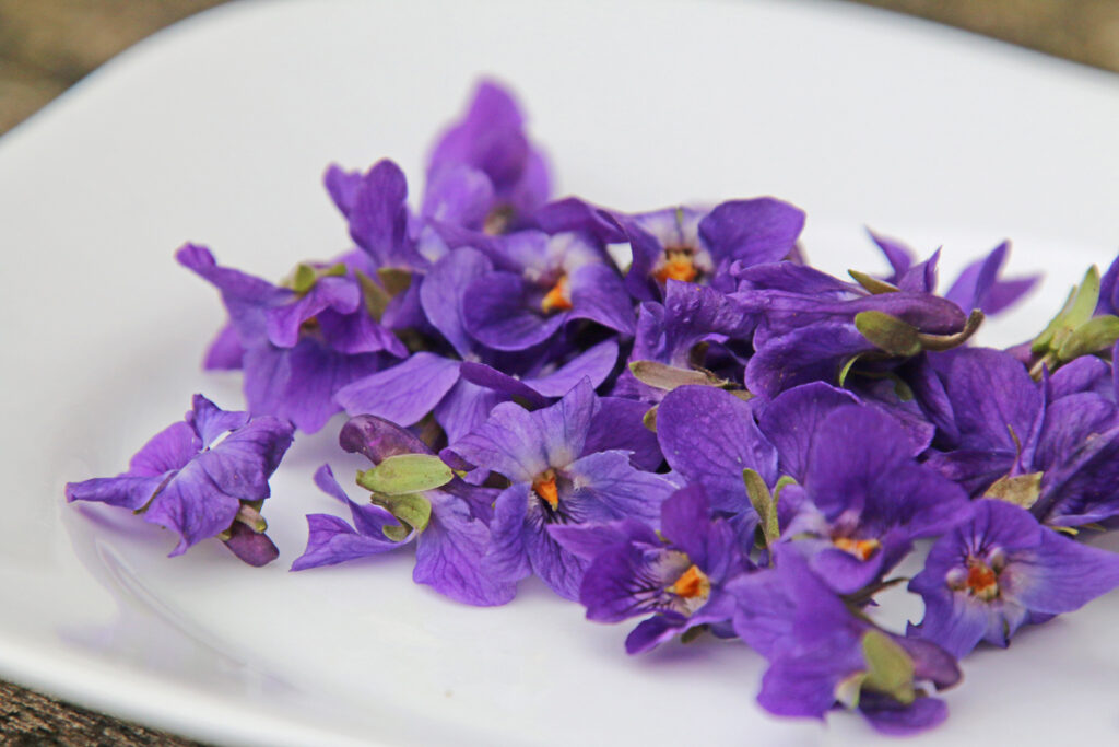 Een bord vol maarts viooltjes.